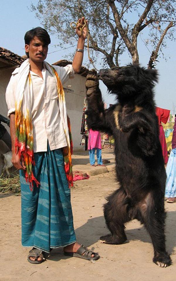 世界动物保护协会助印度政府