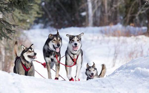加拿大必体验冬季节庆之top10!